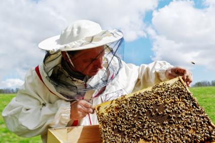 apiculteur honey