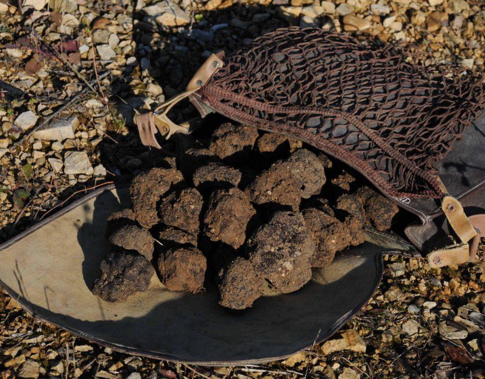 hunting truffle