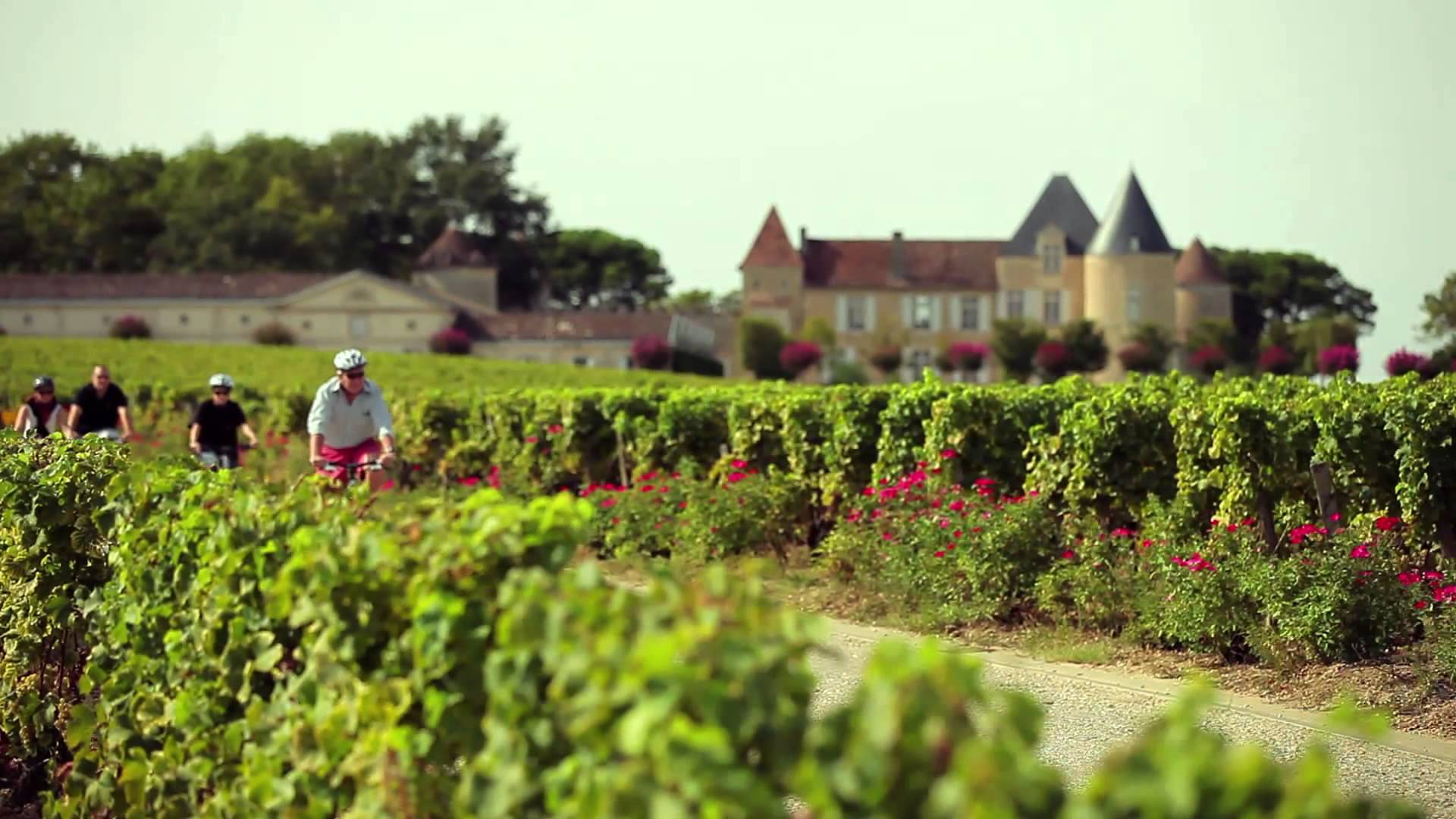 Guided Wine Tour